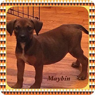 Boxer/Shepherd (Unknown Type) Mix Puppy for adoption in Warren, Michigan - Maybin
