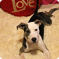 Adopt A Pet :: Ashton - Millington, TN