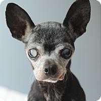 Adopt A Pet :: Ruthie - Romeoville, IL