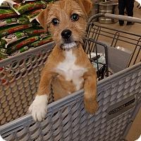 Adopt A Pet :: Xander pending adoption - East Hartford, CT