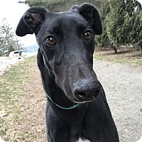 Adopt A Pet :: Kyle - Swanzey, NH
