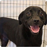 Adopt A Pet :: Roo - Pompton Lakes, NJ