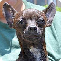 Adopt A Pet :: Rico - Camden, SC
