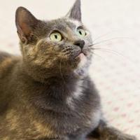 Adopt A Pet :: Elise - Cartersville, GA