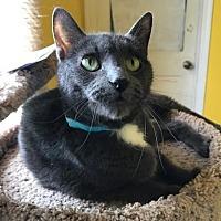 Adopt A Pet :: Guciu - Devon, PA