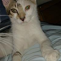 Adopt A Pet :: PEPPER - Putnam Hall, FL