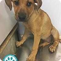 Adopt A Pet :: Fiona - Kimberton, PA
