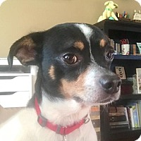 Adopt A Pet :: Brooks (NC) - Raleigh, NC