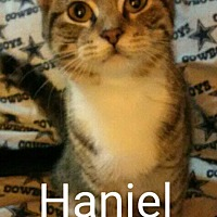Adopt A Pet :: Haniel - Middletown, OH