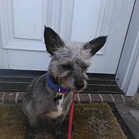 Adopt A Pet :: hercules - haslet, TX