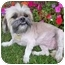 Photo 1 - Lhasa Apso Mix Dog for adoption in Los Angeles, California - SAGE