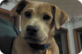Dachshund/Terrier (Unknown Type, Small) Mix Puppy for adoption in Marshfield, Massachusetts - Jase Luke-pending adoption