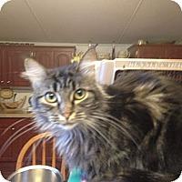 Adopt A Pet :: Wattage - Pace, FL
