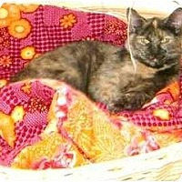 Adopt A Pet :: Stella - Etobicoke, ON