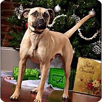 Adopt A Pet :: Einstein - Owensboro, KY