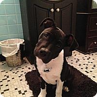 Adopt A Pet :: Wyatt - Bradenton, FL