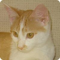 Adopt A Pet :: BRADY - 2014 - Hamilton, NJ