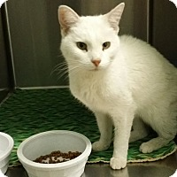 Adopt A Pet :: Snow - Cody, WY
