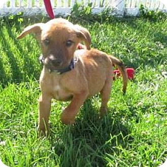 Hound (Unknown Type) Mix Puppy for adoption in Janesville, Wisconsin - Tom Daley