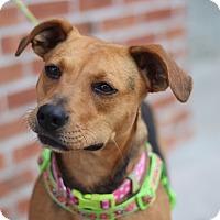 Adopt A Pet :: Cher - Richmond, VA
