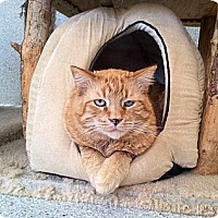 Adopt A Pet :: Sunny - Mountain Center, CA