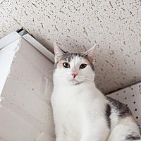 Adopt A Pet :: Kianna - Statesville, NC