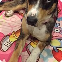Adopt A Pet :: Lena - ST LOUIS, MO