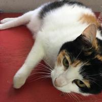Adopt A Pet :: Lizzy - Metairie, LA
