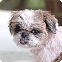 Adopt A Pet :: Anna - Greensboro, NC