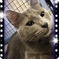 Adopt A Pet :: Misha - Kalamazoo, MI