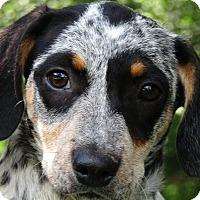 Adopt A Pet :: Tidbit - Allentown, PA
