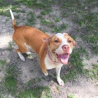 Adopt A Pet :: Millie - Gainesville, FL