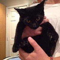 Adopt A Pet :: Cole - Tuckerton, NJ