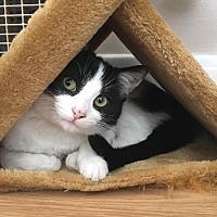 Adopt A Pet :: Bandito - Shelbyville, KY