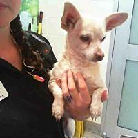 Adopt A Pet :: SATURN - Grand Prairie, TX