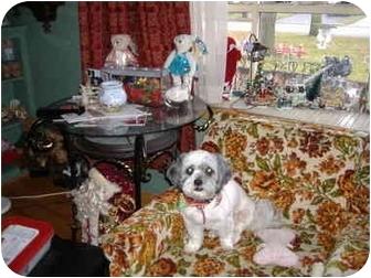 Shih Tzu Dog for adoption in London, Ontario - Emmeline