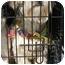 Photo 3 - Lhasa Apso Dog for adoption in Provo, Utah - KIBBEE