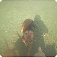 Adopt A Pet :: Athena - Murfreesboro, TN