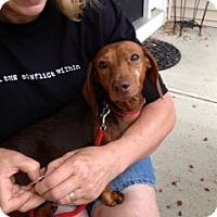 Adopt A Pet :: Gypsy - Hilliard, OH