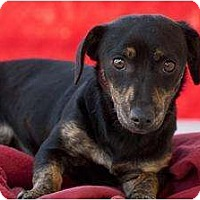 Adopt A Pet :: Willa - Los Angeles, CA