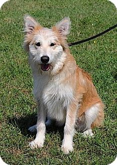 Terrier (Unknown Type, Medium) Mix Dog for adoption in Rapid City, South Dakota - Arlo