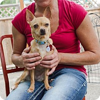 Adopt A Pet :: Juliette - Eugene, OR