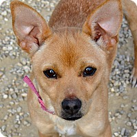 Adopt A Pet :: Cher - Meridian, ID