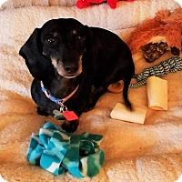 Adopt A Pet :: Mindy - Decatur, GA