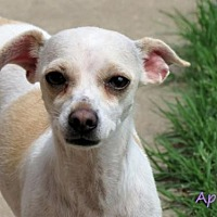 Adopt A Pet :: April - Oklahoma City, OK