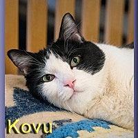 Adopt A Pet :: Kovu - Aldie, VA