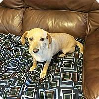 Adopt A Pet :: Starla - Osteen, FL