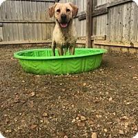 Adopt A Pet :: Faith Hill - Providence, RI