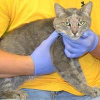 Adopt A Pet :: Skyler - Monticello, GA