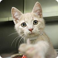 Adopt A Pet :: Engelbert - Richmond, VA